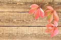 Folhas vermelhas e verdes do outono Fotos de Stock Royalty Free