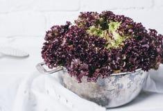 Folhas vermelhas frescas da alface da salada em um fundo do fim branco da opinião superior de parede de tijolo acima de horizonta foto de stock royalty free