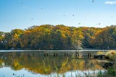 Folhas Wispy que caem sobre cores da queda, o céu azul e um cais jorrando Imagem de Stock Royalty Free