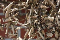 Folhas Withered imagem de stock