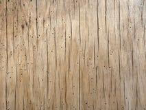 Folheado de madeira atacado pela larva de carcoma Fotos de Stock Royalty Free