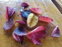 Folheia o jardim do outono imagens de stock royalty free