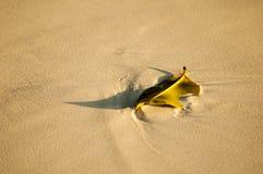 Folheie na praia na ilha de Surin, Tailândia Foto de Stock