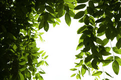 Foliage Royalty Free Stock Photography