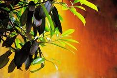 Foliage Royalty Free Stock Image