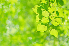 Foliage Stock Images