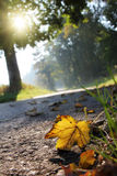 Foliage. On the asphalt of a grey road with grass Stock Images