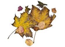 Foliage Stock Photos