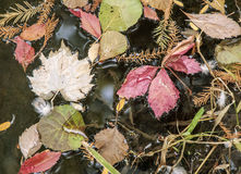Foliage. Image of autumn foliage flowing on water Stock Images