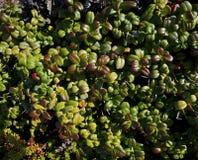 Foliage Stock Photography