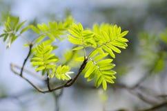 foliage Imagem de Stock