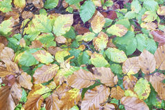 foliage Fotos de Stock