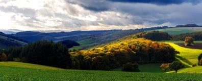 foliage Imagens de Stock Royalty Free