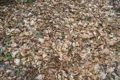 foliage Imagem de Stock Royalty Free