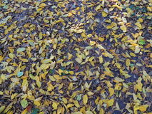 foliage Imagens de Stock