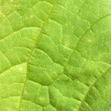 Foliage. The surface of green leaf with foliage stock image