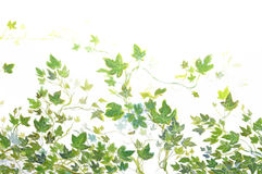 Foliage. Hand-painted foliage decoration on a white ceiling Royalty Free Stock Photo