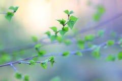 foliage Foto de Stock Royalty Free