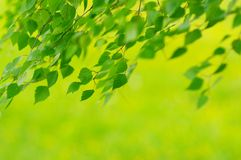 Foliage Royalty Free Stock Image