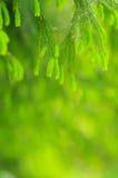 Foliage Royalty Free Stock Photos