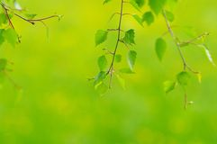 Foliage Stock Photography
