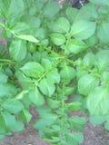 foliage Fotografia de Stock