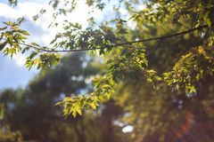 foliage Foto de Stock Royalty Free