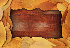 Foliage abstract frame Stock Photo