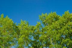Foliage against the sky Stock Photos