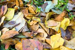 Foliage in autumn Stock Photography