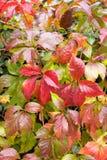 Foliage in autumn Stock Image