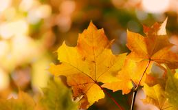 Foliage autumn background stock photography