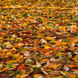 Foliage in the autumn park Stock Photography