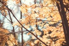 Foliage in the autumn park Stock Photos