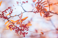 Foliage in the autumn park Stock Image