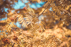Foliage in the autumn park Stock Photo