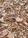 Foliage Stock Image