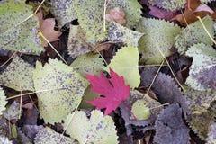 Foliage Autumn Stock Image