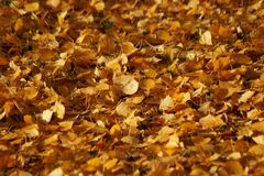 Autumn foliage on the ground stock image