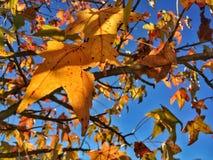 foliage in autumn Stock Photos