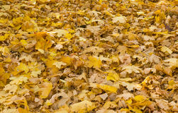 Foliage in autumnal forest Stock Image