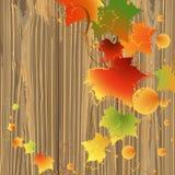 Foliage backdrop wood Stock Photos