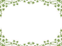 Foliage background Royalty Free Stock Images