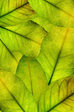 Foliage background Royalty Free Stock Photos