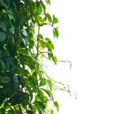 Foliage background royalty free stock photos