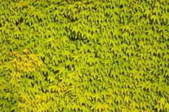 Foliage background Stock Photos