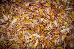 Foliage for background and texture Royalty Free Stock Photos
