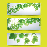 Foliage Banner Set Stock Image