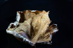 Foliage begins when the leaves are on the ground, by fungi, bacteria and mites. The decomposition of the foliage begins when the leaves are on the ground, by royalty free stock image