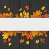 Foliage Black Wood White Banner Stock Photos